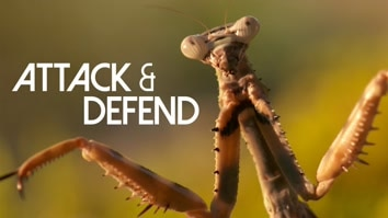 Attack & Defend