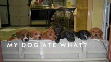 My Dog Ate What?