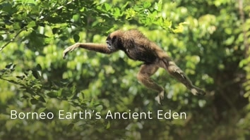 Borneo: Earth's Ancient Eden