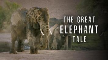 The Great Elephant Tale