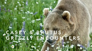 Casey & Brutus: Grizzly Encounters
