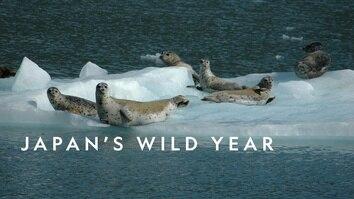 Japan's Wild Year