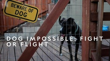 New: Dog Impossible: Fight Or Flight