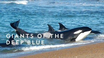 Giants Of The Deep Blue