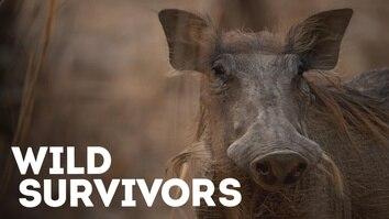 Wild Survivors