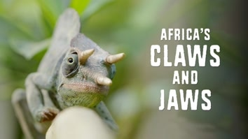 Africa's Claws And Jaws