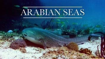 Arabian Seas