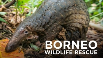 Borneo Wildlife Rescue
